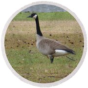 Canadian Goose Strut Round Beach Towel