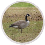 Canadian Goose Strutting  Round Beach Towel