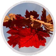 Canadian Maple Leaves In The Fall Round Beach Towel