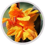 Canna Lily Named Wyoming Round Beach Towel