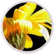 Canopy Of Petals Round Beach Towel