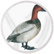 Canvasback Duck  Round Beach Towel by Anonymous
