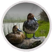 Canvasback Duck Pair By A Pond Round Beach Towel