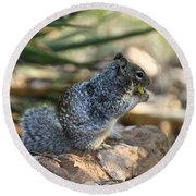 Canyon Squirrel Round Beach Towel