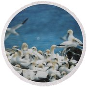 Cape St. Mary Ecological Resrve Round Beach Towel