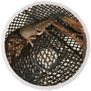 Captured Crawdaddies Round Beach Towel