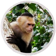 Capuchin Monkey Round Beach Towel