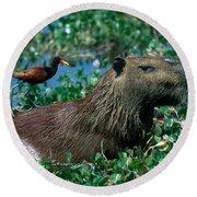 Capybara And Jacana Round Beach Towel