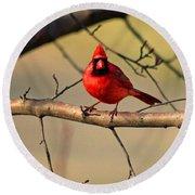 Cardinal Beauty Round Beach Towel