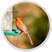 Cardinal Bird At Bird-feeder Round Beach Towel