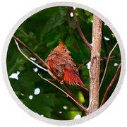 Cardinal Bird Baby Round Beach Towel