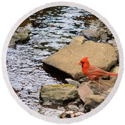 Cardinal By The Creek Round Beach Towel