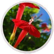 Cardinal Climber Flowers Round Beach Towel