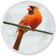 Cardinal I Round Beach Towel