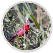 Cardinal In Bush Iv Round Beach Towel