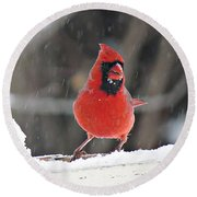 Cardinal In Snowstorm Round Beach Towel