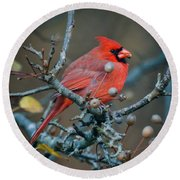 Cardinal In The Berries Round Beach Towel