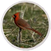 Cardinal In The Field Round Beach Towel
