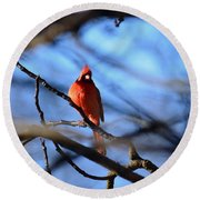 Cardinal In The Midst Round Beach Towel