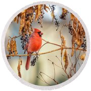 Cardinal In The Pokeberries Round Beach Towel