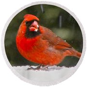 Cardinal In The Snowstorm Round Beach Towel