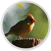 Cardinal Light Round Beach Towel