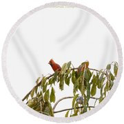 Cardinal On A Branch Round Beach Towel