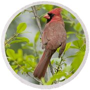 Cardinal Pictures 123 Round Beach Towel