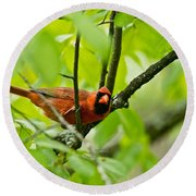 Cardinal Pictures 138 Round Beach Towel