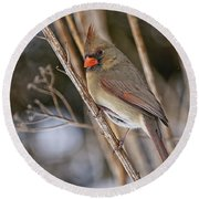 Cardinal Pictures 50 Round Beach Towel