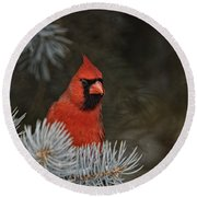 Cardinal Pictures 84 Round Beach Towel