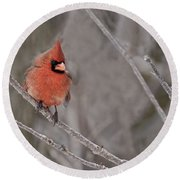 Cardinal Pictures 97 Round Beach Towel