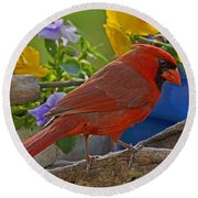 Cardinal With Pansies Round Beach Towel