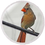 Cardinal Young Female Round Beach Towel