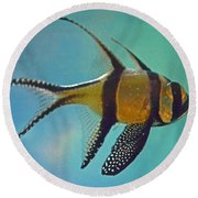 Cardinalfish Round Beach Towel