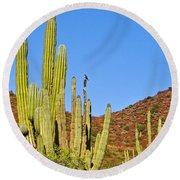 Cardon Cactus In Bahia Kino-sonora-mexico Round Beach Towel