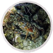 Caribbean Reef Lobster On Night Dive Round Beach Towel