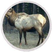 Elk Side Profile - Banff, Alberta Round Beach Towel