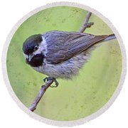 Carolina Chickadee On Angled Perch Round Beach Towel