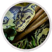 Carpet Python  Round Beach Towel