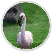 Carribean Pink Flamingo Round Beach Towel
