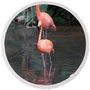 Cartoon - A Flamingo In The Small Lake In Their Exhibit In The Jurong Bird Park Round Beach Towel