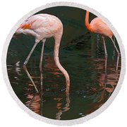 Cartoon - A Flamingo With Its Head Under Water In The Jurong Bird Park Round Beach Towel
