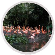 Cartoon - Flamingos In Their Exhibit Along With A Small Lake In The Jurong Bird Park Round Beach Towel