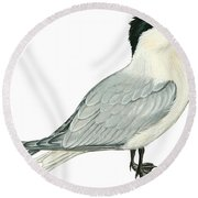 Caspian Tern Round Beach Towel by Anonymous