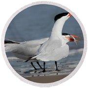 Caspian Tern Giving Fish To Mate Round Beach Towel