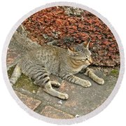 Cat At Wat Mahathat In 13th Century Sukhothai Historical Park-th Round Beach Towel