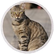 Cat In Aegina Island Round Beach Towel