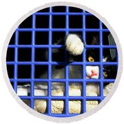 Cat In Pet Carrier Round Beach Towel