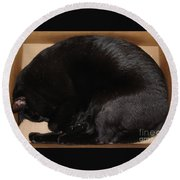 Cat In The Box Round Beach Towel